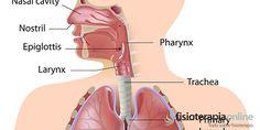 fisiologia pulmonar - Buscar con Google