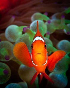 Nemo singular - The 2012 Readers' Photo Contest Winners | Popular Photography
