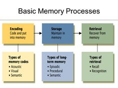 Picture Memory Process, Spaced Repetition, Types Of Memory, Psychology, Coding, Memories, Image, Psicologia