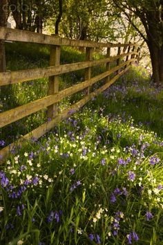 So Pretty!  small abundant purple and white wild flowers - healthy tree - simple fence