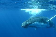 Underwater Photo Gallery: Rosanna Sickels