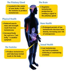 Testosterone and your head(s). How low T relates to depression and erectile disfunction.