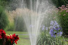 Plant Water Requirements | Eden's garden