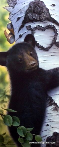A cute black bear cub seems to be stuck on the trunk of a birch tree in the Jerry Gadamus paper giclee print MAMA'S BOY. Tree has a heart carved in it making pic all the more cute. Please also visit www.JustForYouPropheticArt.com for colorful Art paintings and prints. Thank you so much! Blessings!