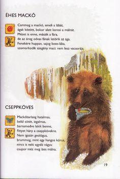 Ildikó Fazekasné Ozsváth - Google+ Bear Cubs, Album, Nap, Sign, School, Google, Picasa, Projects, Cubs