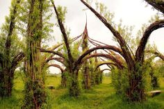 Willow Cathedral https://www.facebook.com/65239508296/photos/pb.65239508296.-2207520000.1406224249./10152109135878297/?type=3