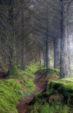 Scotland On the path to King's Cave, Isle of Arran, Scotland