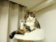 """Maru: """"Talk to the paw!"""""""