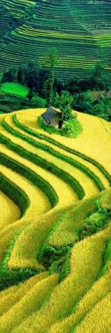 For the sake of Anthropology and subsistance practices: Rice terraces Yuanyang Vietnam