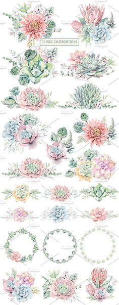 AMAZING SUCCULENTS Watercolor set - Illustrations