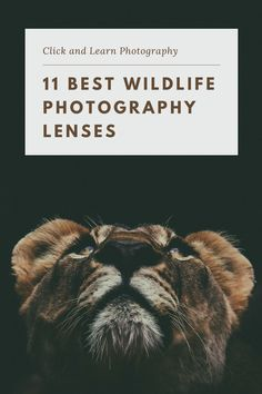 Click and Learn Photography rounds up the 11 best lenses for wildlife photography, including options for DSLR and mirrorless cameras. #photography #photographytips #wildlifephotography #photographygear #cameras #lenses Dslr Photography Tips, Learn Photography, Photography Tutorials, Wildlife Photography, Animal Photography, Amazing Photography, Landscape Photography, Travel Photography, Best Camera Lenses