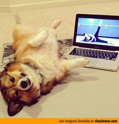Perro haciendo aeróbic.