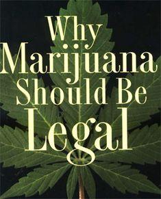 cause and effect essay  essay examples and essay writing on pinterestpersuasive exemplification essay – legalizing marijuana http     scholaradvisor com