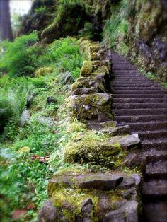 Stairs in Oregon.