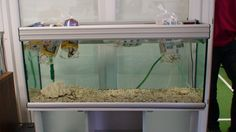 the day 1 of the aquarium of CIT