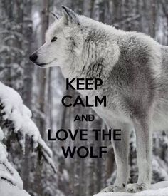 Keep Calm and Love the Wolf--Fairy Tale Dreams Photo Wolf Spirit, My Spirit Animal, Beautiful Wolves, Animals Beautiful, Teen Wolf, Wolf Stuff, Wolf Pictures, Wolf Images, Wolf Love