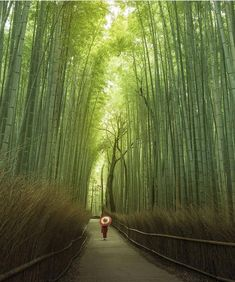 Pathway through the bamboo forest in Arashiyama, Kyoto, Japan. Photo: (i. Kyoto Japan, Japan Japan, Bamboo Forest Japan, Beautiful World, Beautiful Places, Places To Travel, Places To Go, Forest Bathing, Destination Voyage