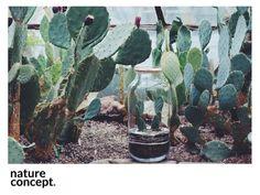 Nasza meksykańska piękność opuncja wygrzewa się wśród swoich. Las w szkle, Ekosystem, Biosfera, Las w słoiku, Terrarium, Kaktus, Opuncja #natureconcept #laswszkle #nature #moss #fern #plants #poland #ekosystem #green #laswsłoiku #terrarium #design #love #soil #urbanjungle #plantsfriend #style #fashion #modern #forest #rośliny #mossterrarium
