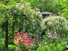 #-neuer Gartentraum- Rosenbögen