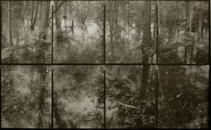 Koichiro Kurita. Flood in Forest, Catskill NY , 2006 .Platinum print on hand made gampi paper. 50.8 x 81.3 cm. Courtesy of Michael Hoppen gallery.