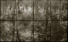 Koichiro Kurita. Flood in Forest, Catskill NY , 2006
