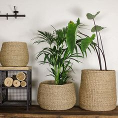 Small Round Seagrass Basket by Nkuku. The Noko seagrass baskets have a distinct tapered design. Bring them to life with indoor plants, the natural Tall Basket, Plant Basket, Basket Planters, Round Basket, Hanging Planters, Baskets For Plants, Decoration Chic, Basket Decoration, Seagrass Storage Baskets