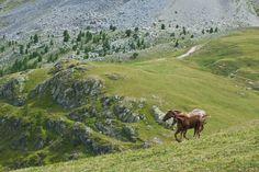 Horses • Valle Maira, Piedmont, Italy • www.invalmaira.it