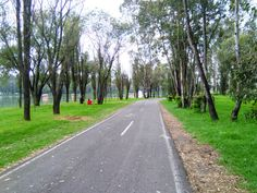 Bosque/ tlahuac Sidewalk, Landscape, Woods, Scenery, Side Walkway, Walkway, Corner Landscaping, Walkways, Pavement