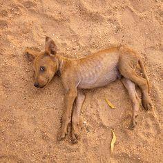 Puppy, Anuradhapura, Sri Lanka Sri Lanka, Kangaroo, Puppies, Animals, Baby Bjorn, Cubs, Animales, Animaux, Animal