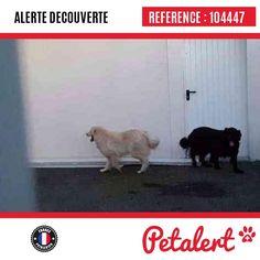 21.01.2017 / Chien / Pomerol / Gironde / France