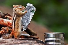 Hilarious and Heartwarming Animals on 500px - Photo by Michael Higgins