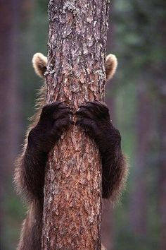 fabulousanimals: Bears are always the best at hiding