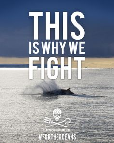 A whale swims free in the sunset. #SeaShepherd