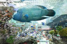 有楽町駅前広場に登場した大水槽の中を悠然と泳ぐナポレオンフィッシュ=31日、東京・有楽町(寺河内美奈撮影)