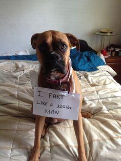 Dog Shame | I fart like a 300 lbs man. Reminded me of Atticus. @Jamie 'Hadley' Dearle