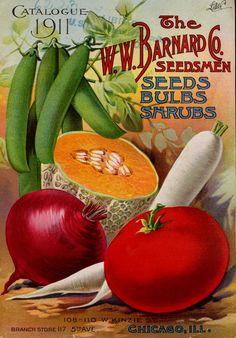 W.W Barnard & Co - Catalogue 1911 : seeds, bulbs, shrubs