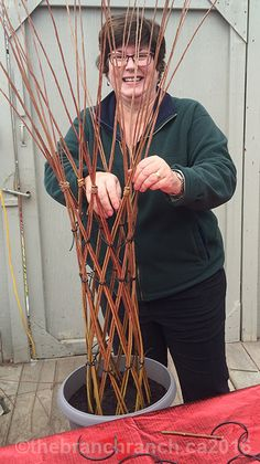 About Our Workshops — The Branch Ranch Living Willow Tree - Modern Willow Furniture, Fairy Furniture, Willow Branches, Willow Tree, Basket Willow, Willow Weaving, Basket Weaving, Jardin Vertical Artificial, Twig Crafts