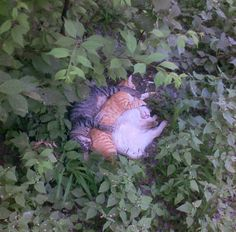 Sleeping pile of cats) cats pics