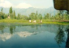 Orti galleggianti sul lago Dal
