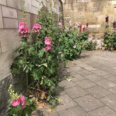 Breaking the Walls :) #flowerpower