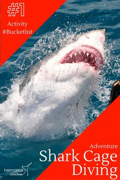 Shark Cage Diving with Great White Shark Tours in Gansbaai, the best shark diving Company in South Africa Adventure Activities, Family Activities, Shark Cage, Stuff To Do, Things To Do, Great White Shark, My Family, Diving, South Africa