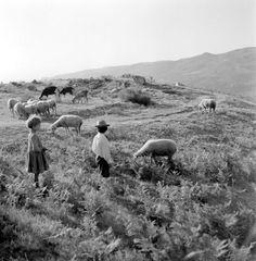 Código de referência: PT/AMLSB/ART/008348 Sheep Breeds, Vintage Photography, Farm Life, Portuguese, Old Photos, Photo Art, 1, Black And White, Couple Photos