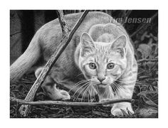 "Tabby cat crouching ready to pounce.  Print of a realistic charcoal drawing titled ""Crouching Tabby"". 4 sizes available. by TimJensenFineArt on Etsy https://www.etsy.com/listing/251086314/tabby-cat-crouching-ready-to-pounce"