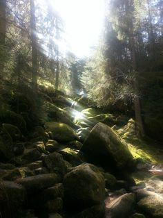 Nature & sun