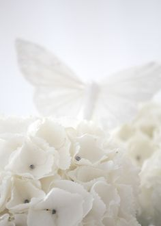 White Flowers and Butterfly