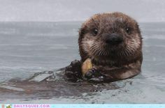 Otters.  I want to own two...Oswald and Esmerelda.  We can swim together in my salt water pool. ;)