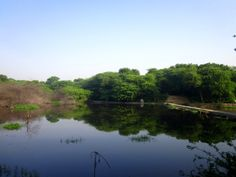 Water bodies of Sanjay Van.