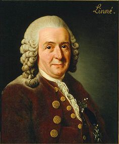 Carolus Linnaeus by Alexander Roslin, 1775 - 18th Century Love