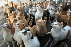 えさを持つ手をじっと見つめる愛媛県大洲市の青島のネコ=2014年11月29日の朝日新聞                                                                                                                                                                                 もっと見る