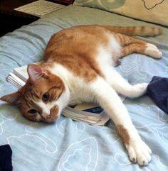 I love orange and white cats!